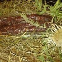Ligiongia sechentada cun agl (2 tocs)